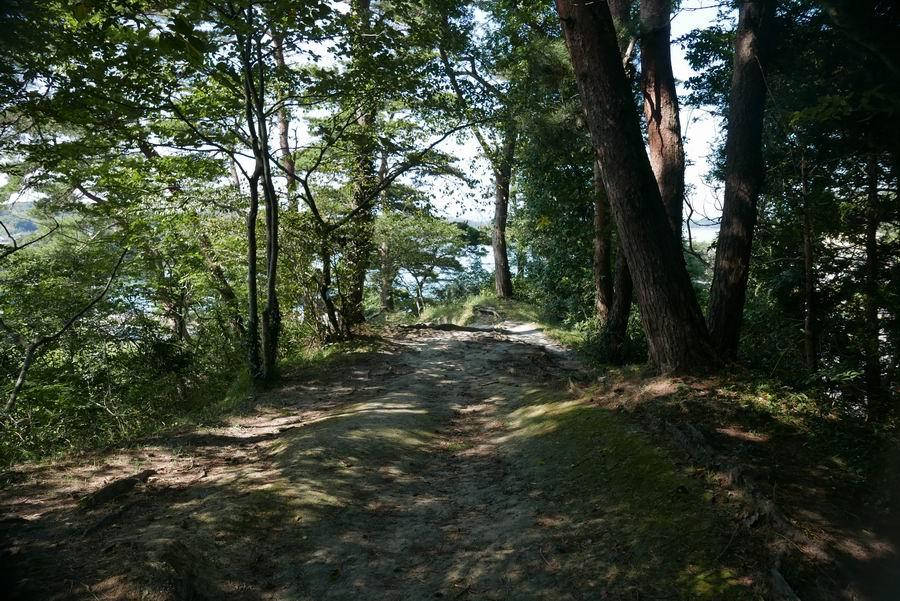 大高森登山道風景