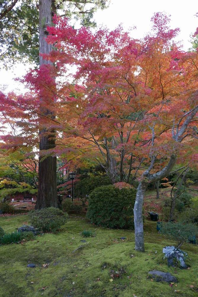 松島円通院の紅葉の写真画像