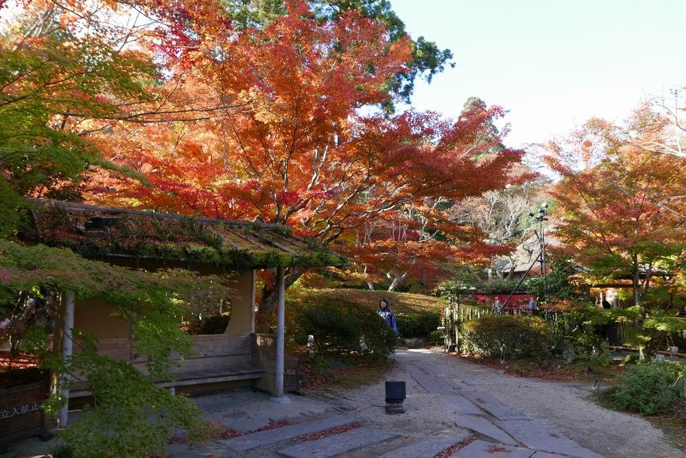 松島観光円通院の紅葉お休み処の写真もいい風景