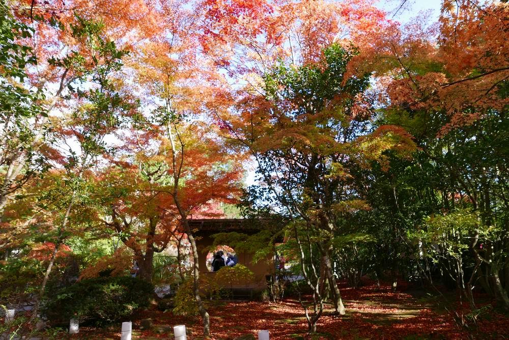 円通院の紅葉お休み処を背面から撮ってみる