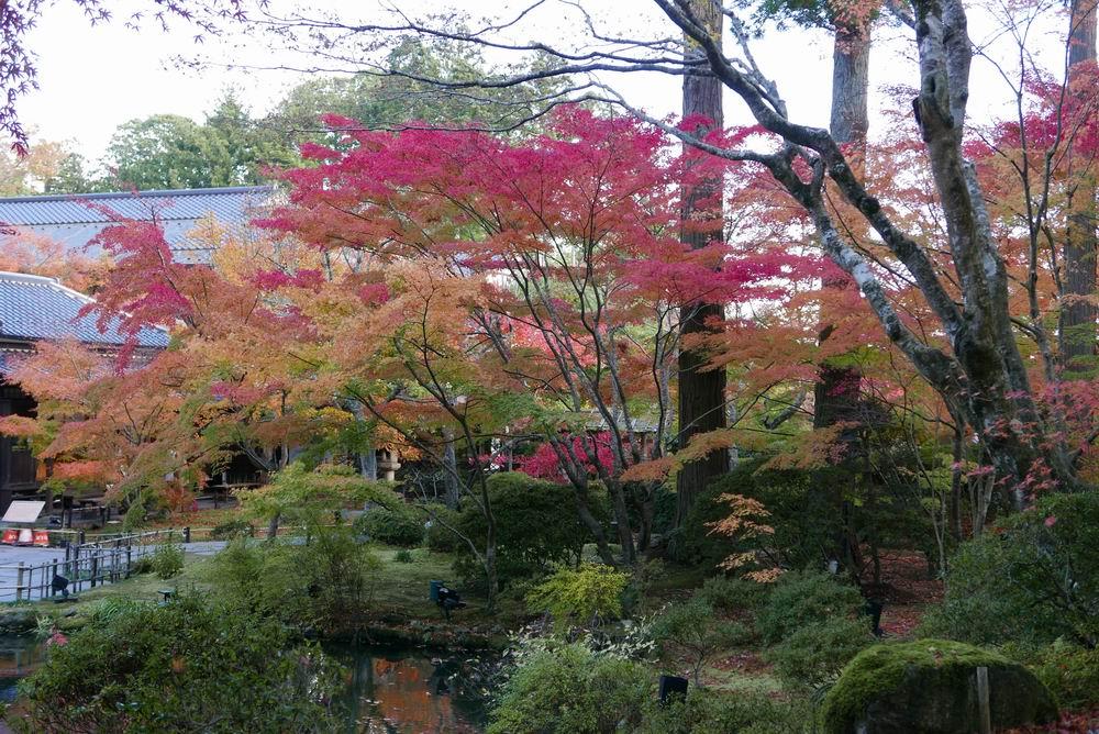 円通院の紅葉赤が映えてとてもきれいな写真画像