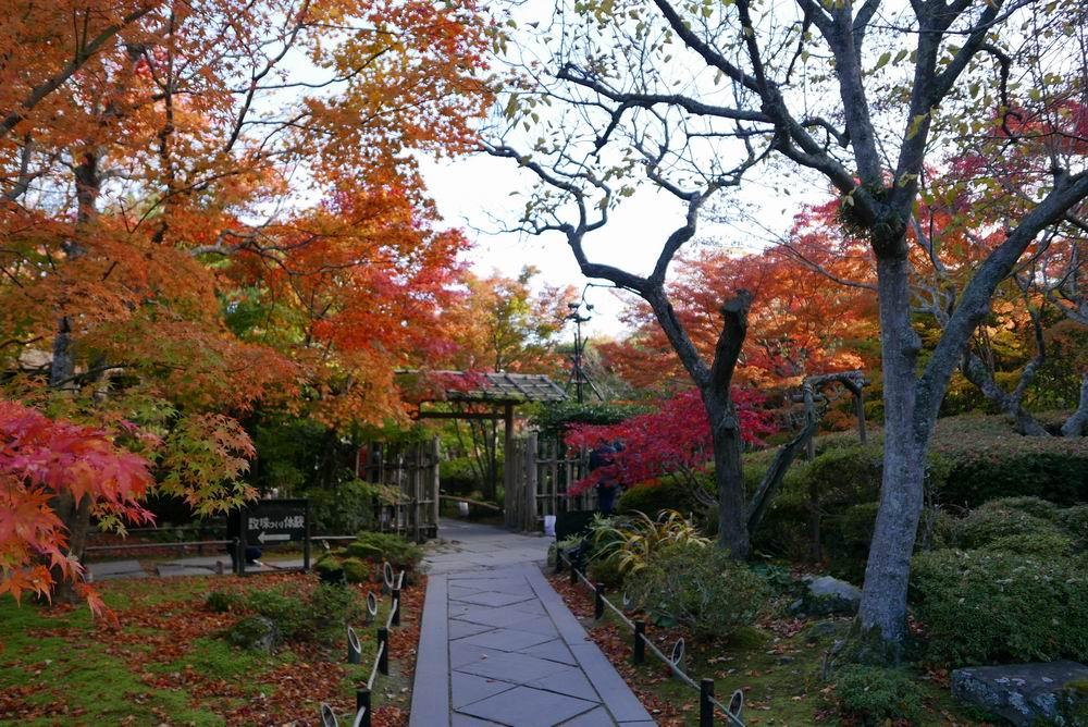 松島円通院の紅葉写真