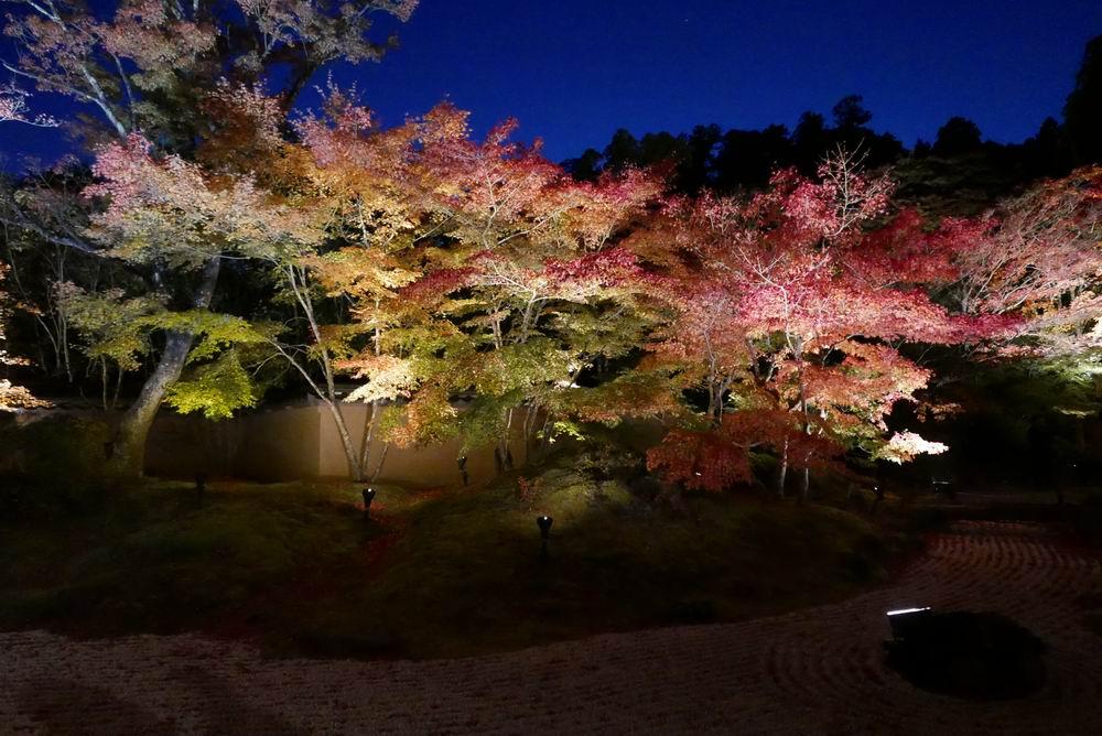 松島観光円通院のライトアップ写真画像2