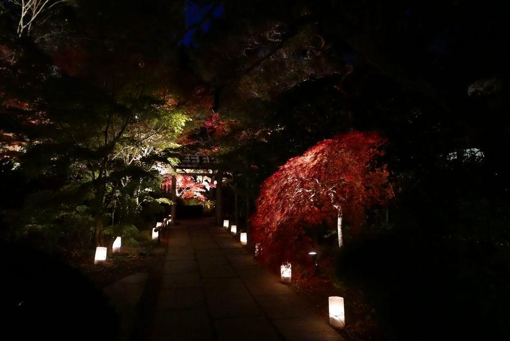 松島観光円通院のライトアップ写真画像4