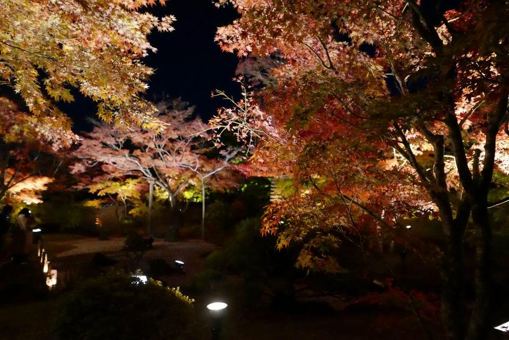 松島観光円通院のライトアップ写真画像5