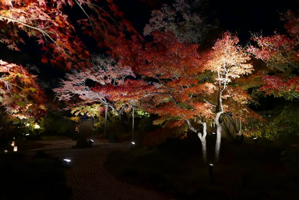 松島観光円通院のライトアップ写真画像6