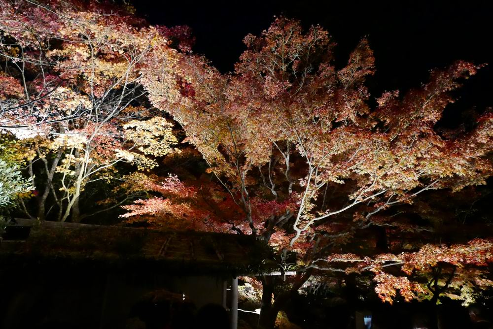 松島観光円通院のライトアップ写真画像7