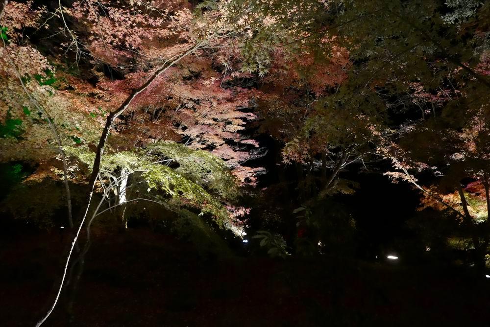 松島観光円通院のライトアップ写真画像8
