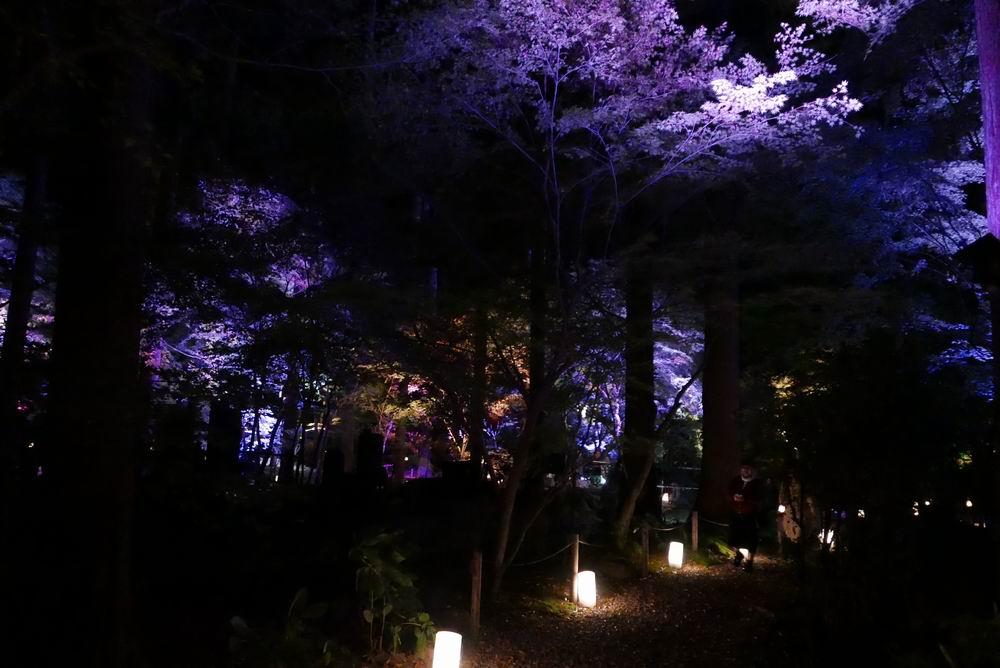 松島観光円通院のライトアップ写真画像9