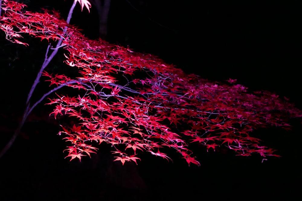 松島観光円通院のライトアップ写真画像10