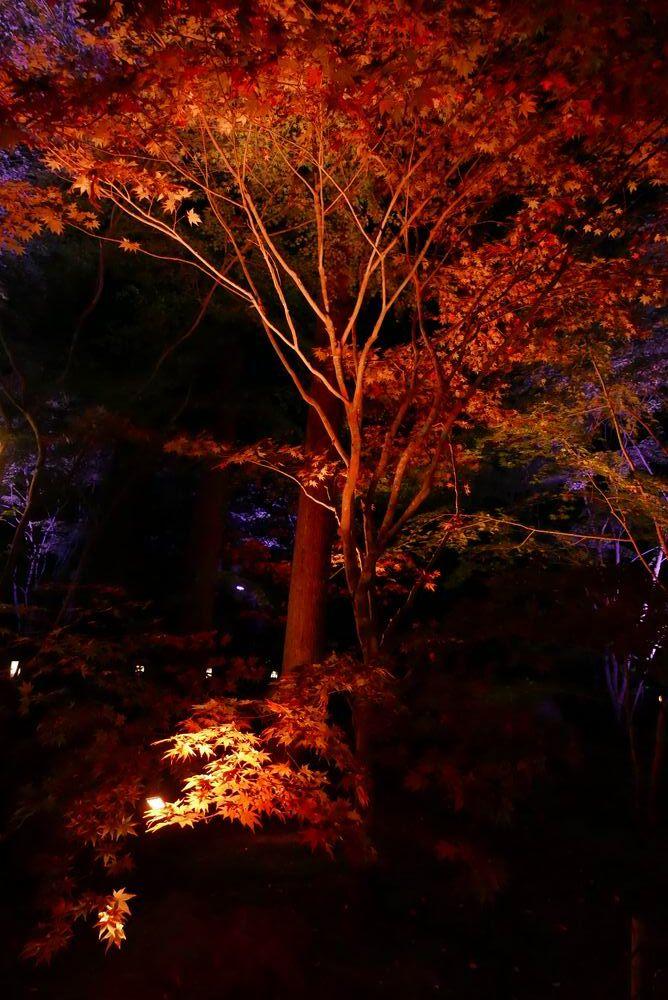 松島観光円通院のライトアップ写真画像11