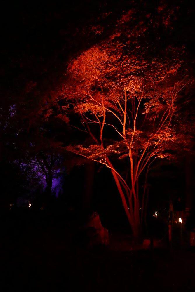 松島観光円通院のライトアップ写真画像12