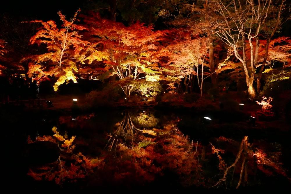 松島観光円通院のライトアップ写真画像13