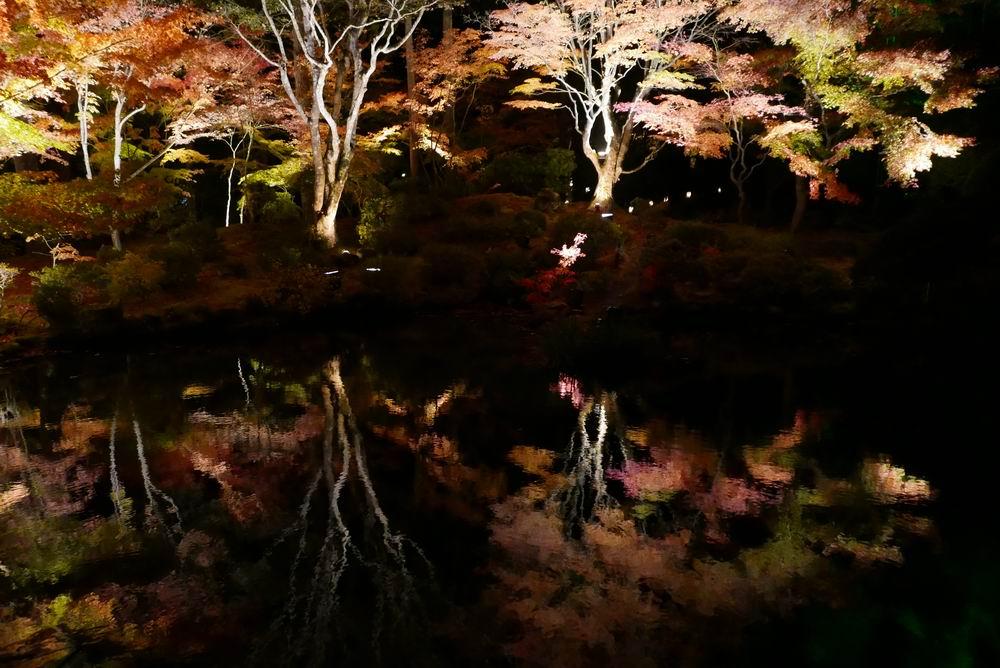 円通院の紅葉のライトアップ画像