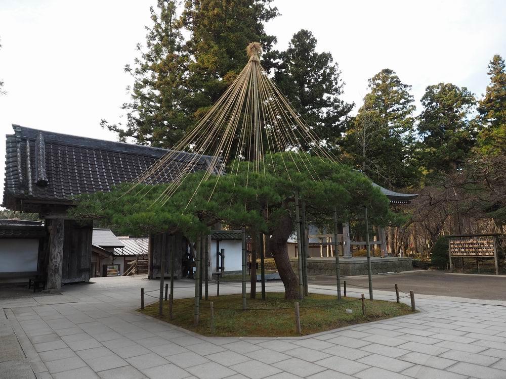 中尊寺境内の中の見事な松風景写真