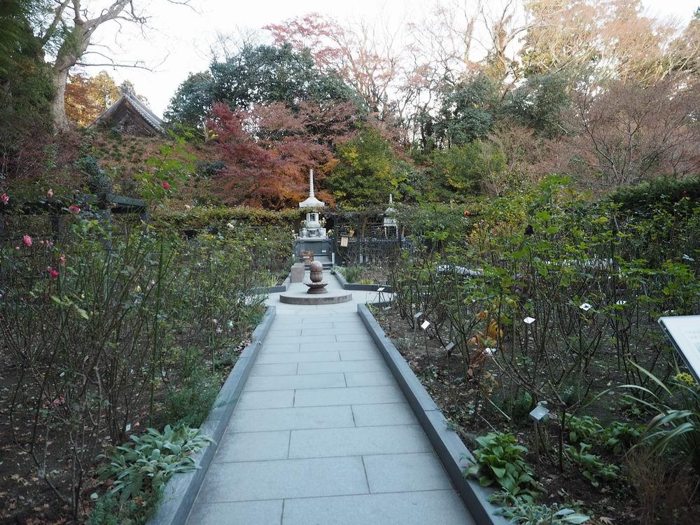 松島円通院のバラ園の写真画像