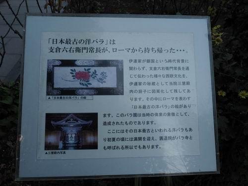 松島円通院バラ園の洋ナシの説明書きの写真画像