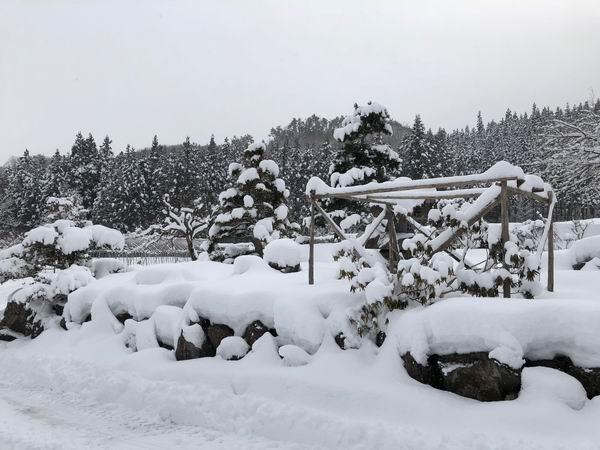 我が家の庭の冬の風景写真
