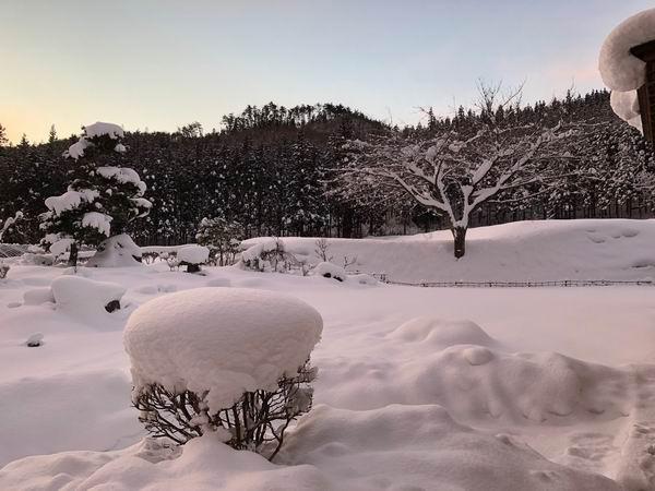 我が家の芝の冬の風景写真