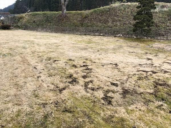 モグラに掘られた芝の画像写真