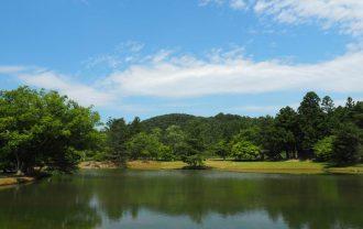 毛越寺大泉尾が池の初夏の写真