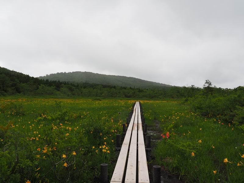 世界谷地原生花園のニッコウキスゲの写真