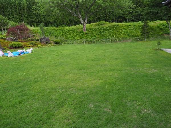 芝刈り刈る前の写真