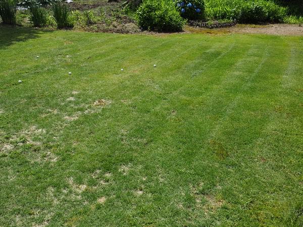 芝刈り完了の写真
